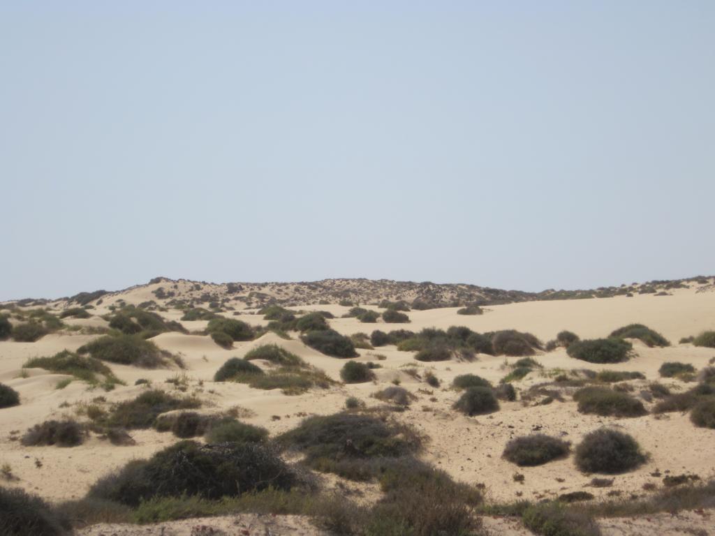 Fuerteventura Juni 2011 (28).JPG