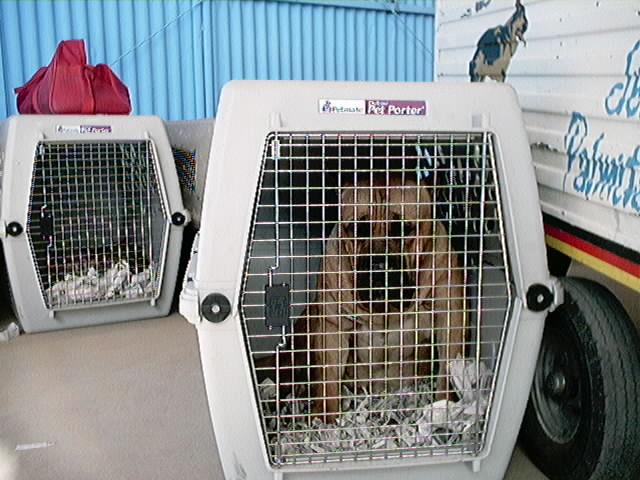 Hundeaustellung Fuerte Oktober 2001 (8)