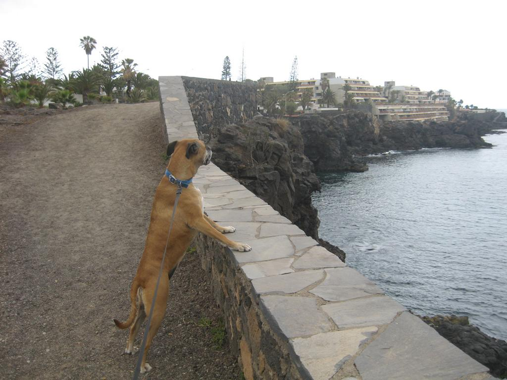 Tenerife Mai 2008 (97).JPG