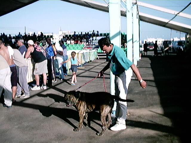 Hundeaustellung Fuerte Oktober 2001 (58)