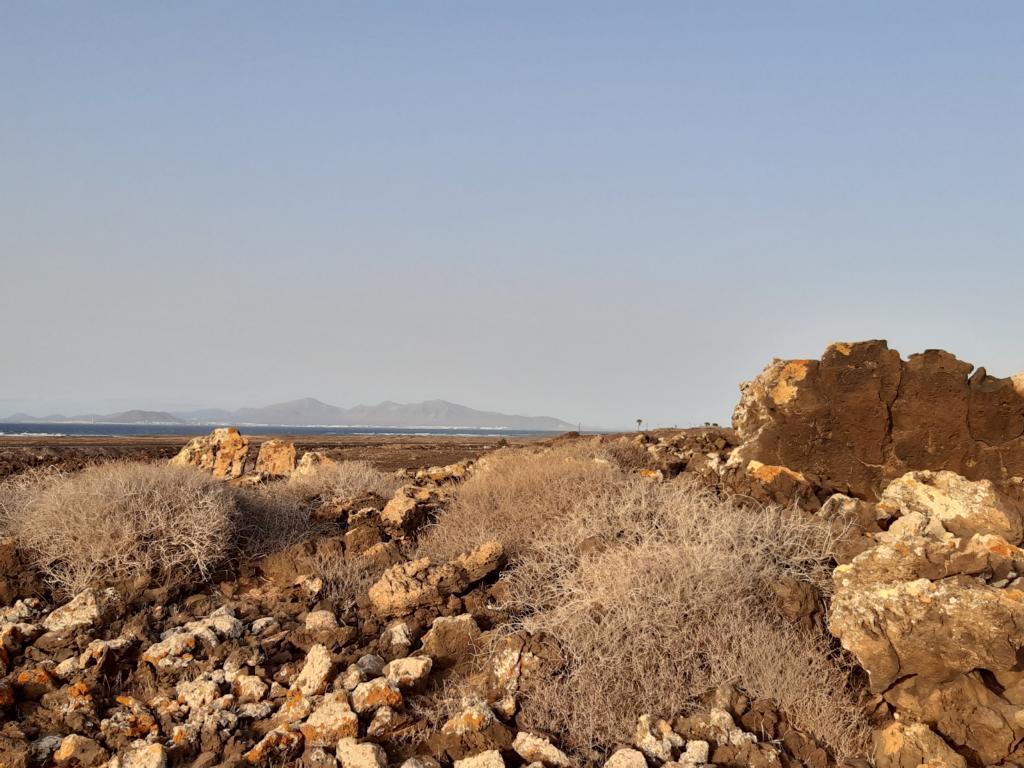 Fuerteventura Febr 2020 web (123)