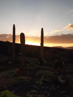Fuerteventura Febr 2020 web (43)