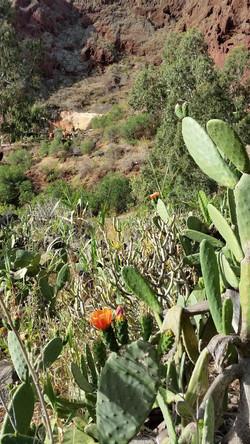 Gran Canaria Mai 2015 (12)_edited.JPG