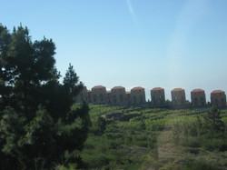 Tenerife Mai 2008 (377).JPG