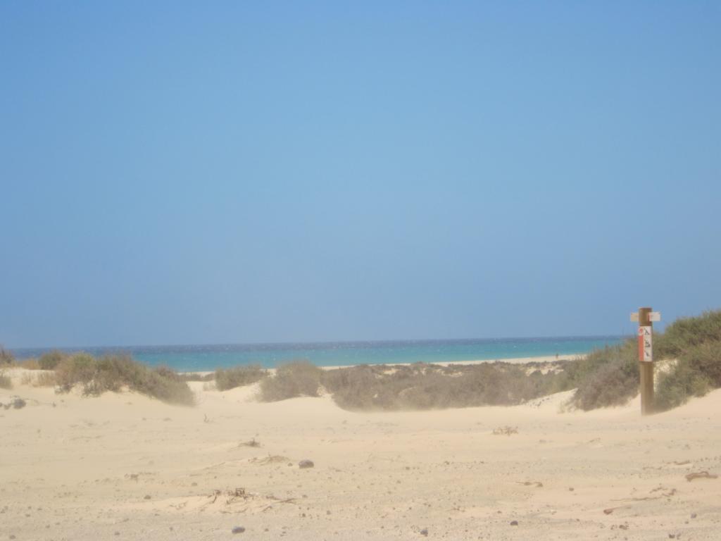 Fuerteventura Juni 2011 (90).JPG