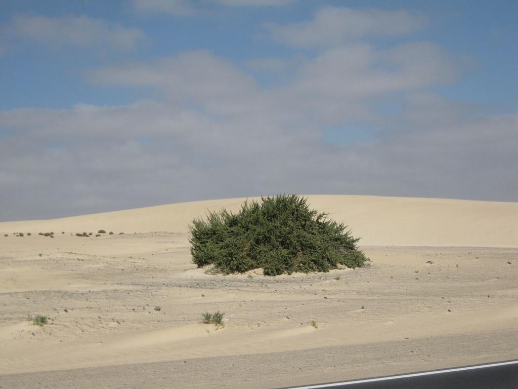 Fuerteventura Mai2009 (61).JPG