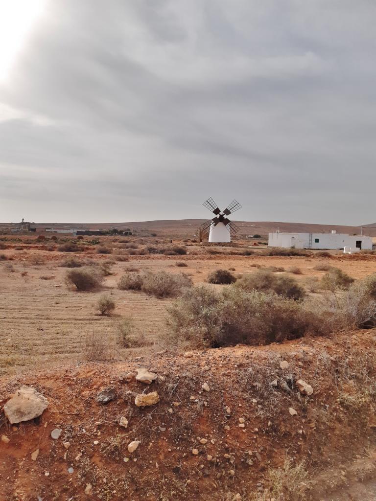Fuerteventura Febr 2020 web (16)