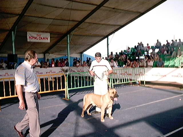 Hundeaustellung Fuerte Oktober 2001 (64)