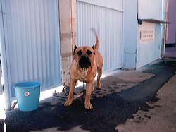 Hundeaustellung Fuerte Oktober 2001 (2)