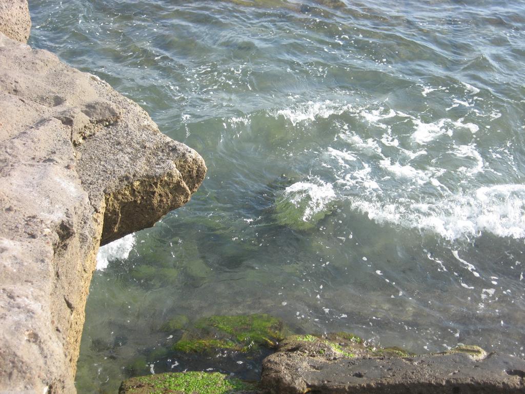Tenerife Mai 2008 (58).JPG