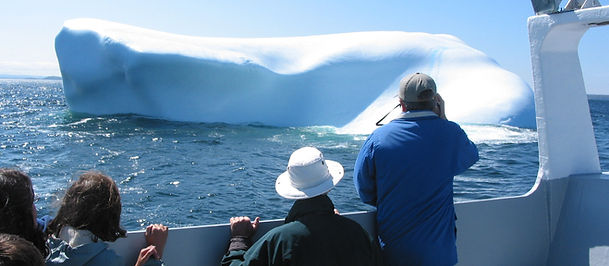 Take a ride on the Dark Tickle Expeditions to see Icebergs and Whales