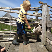 feed the sheep at Norstead