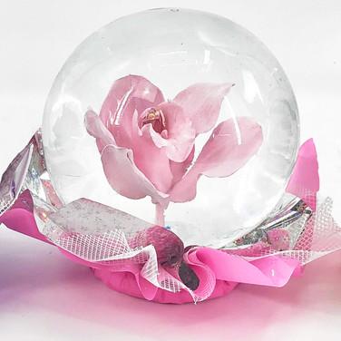 Pink_orchid_rg.jpg