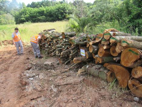 Supressão da vegetação é monitorada pela Gestora Ambiental