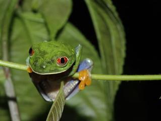El Refugio de la Vida Silvestre Los Guatuzos