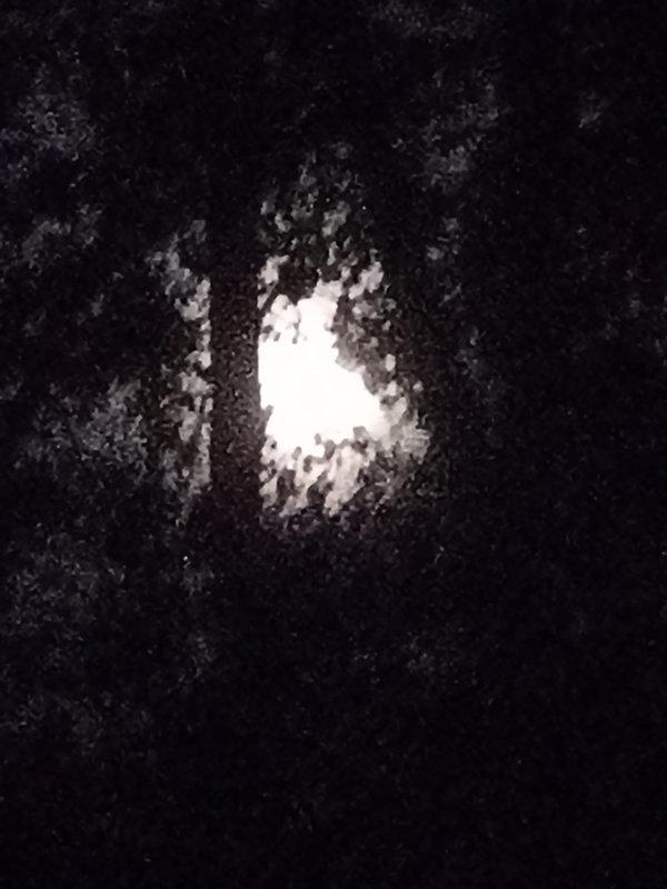 Lune nuit arbres.jpg