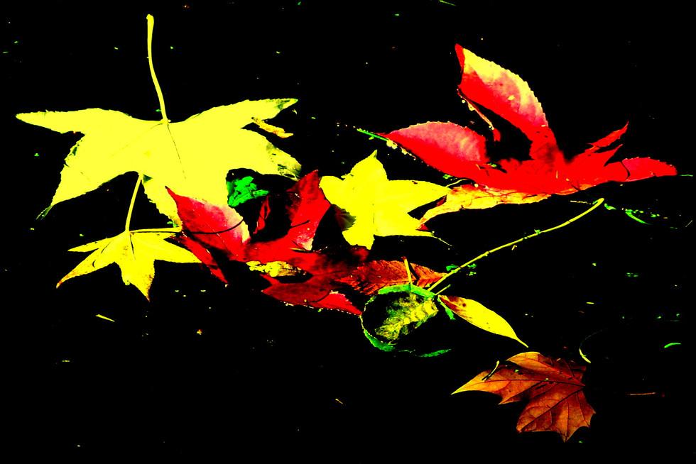 L'automne flottant