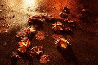 Feuilles mortes sur goudron la nuit éclirées par phares de voiture