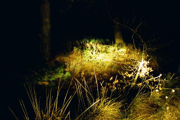 Buisson en forêt éclairé par des phares de voiture