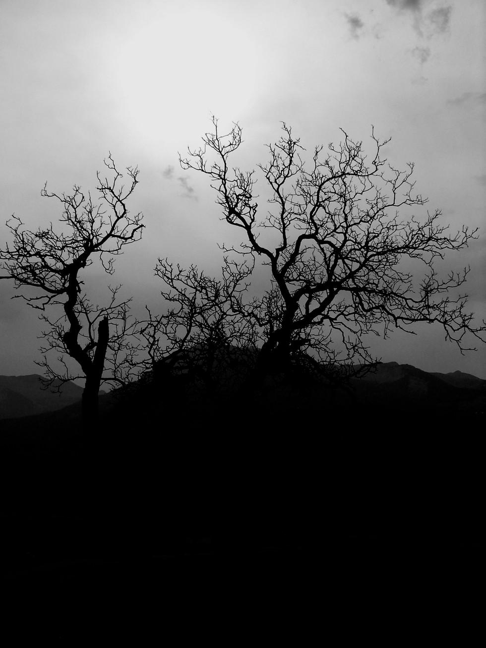silhouette d'un arbre l'hiver photographié à contre jour noir et blanc