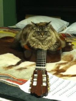 misha.guitar