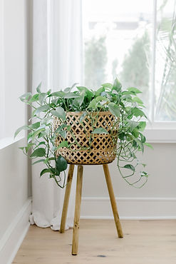 Six Tips for Caring for Your Houseplants