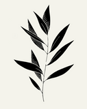 EucalyptusII_1024x1024@2x.png
