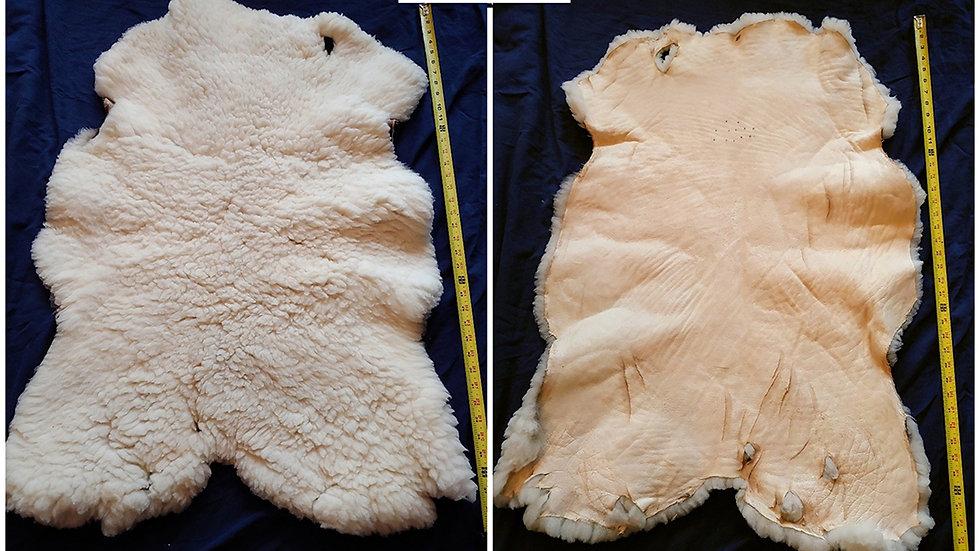 Cozy, Soft Sheep Pelt #5