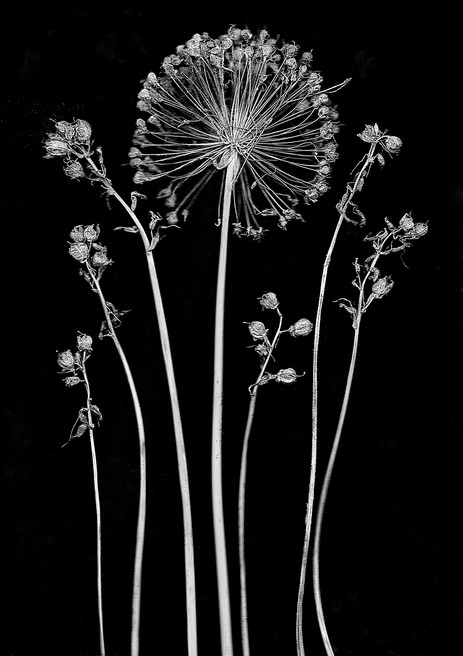 the SIMPLE story   Dr. Seuss' wild onion flower