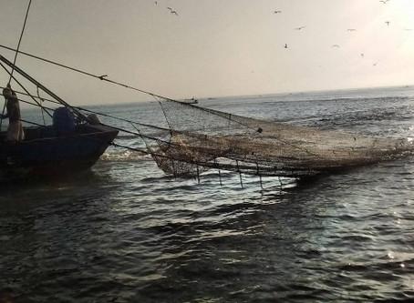 Artigo: Afinal, a pesca de arrasto de camarões pode ser sustentável?