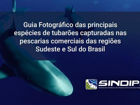 SINDIPI lança Guia Fotográfico das principais espécies de tubarões capturadas