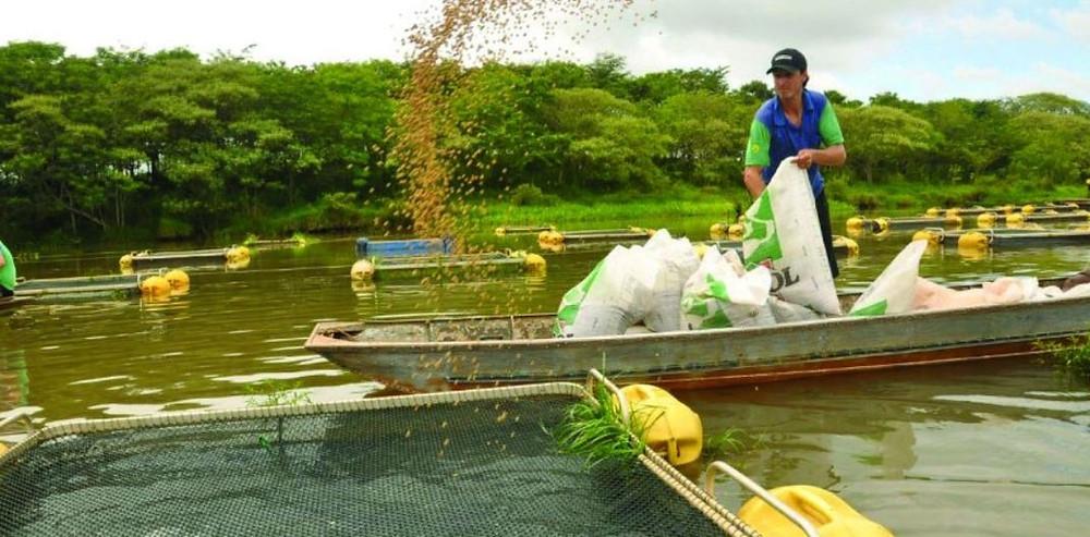 O Brasil espera convencer o Paraguai sobre o potencial de produção de peixes no Lago da usina de Itaipu, que, segundo o secretário nacional de Aquicultura e Pesca, Jorge Seif Junior, pode chegar a 400 mil toneladas anuais – 200 mil para cada país.