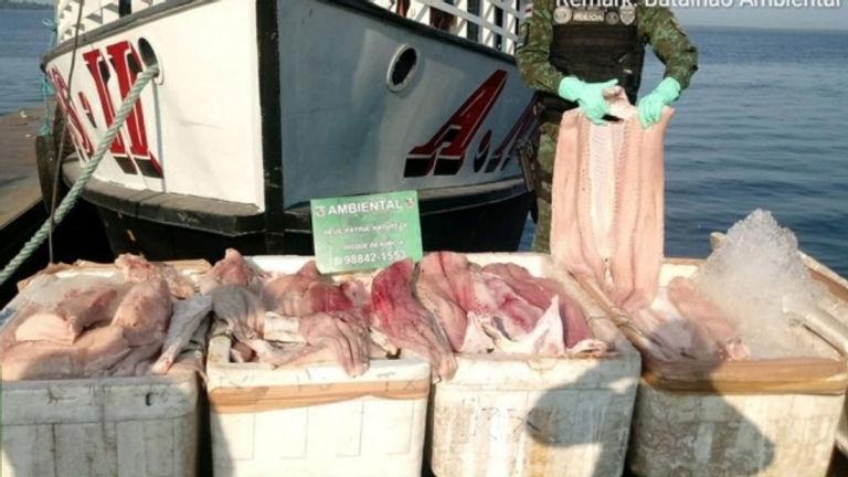 Pesca inlegal.jpg