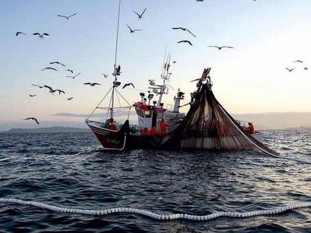 Pesca da Tainha 2021! Um barco autorizado!