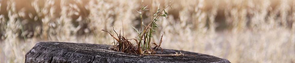 WEEDS _ PESTS Weed - Deb Cristinelli.jpg