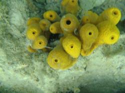 Under vandet 1.jpg