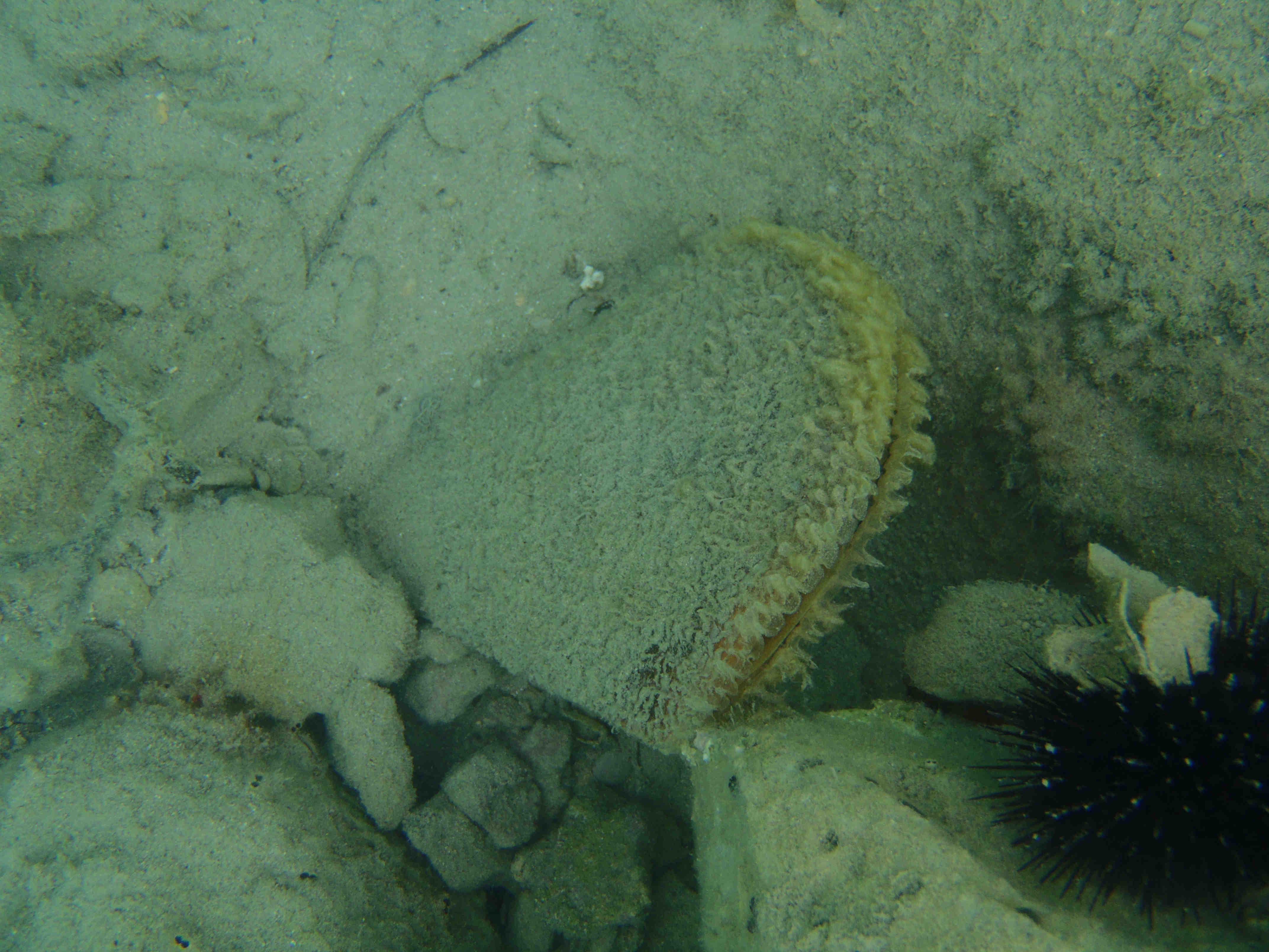 Under vandet 3.jpg