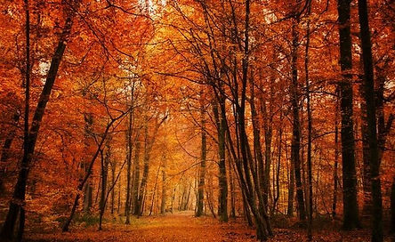 automne'.jpg