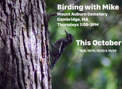 Birding with Mike! Thursdays, October 8th to 29th