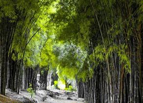 Lokasi Instagramable Yang Ada di Surabaya Yang Wajib Anda Kunjungi