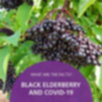 Black Elderberry and Covid-19
