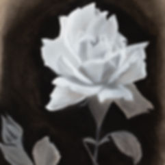 Black and white chalk and charcoal rose original artwork drawing