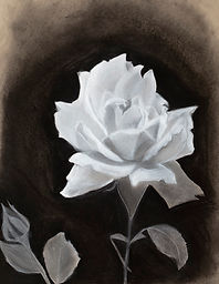 Chalk & Charcoal original handmade black and white charcoal rose drawing.