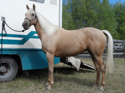 horses 063