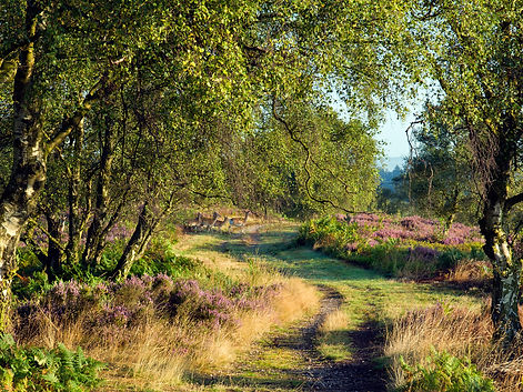 Mindful walking Staffordshire