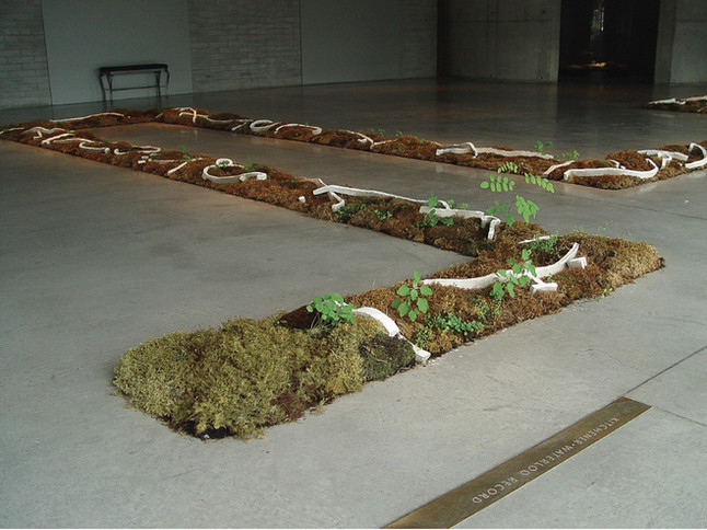 "Christian Bernard Singer Chaconne de Paeton, 2005 Moss, earth, unfired clay, engobe, video projection 70' x 45' x 8"" Image from end of exhibition, showing plants growing out of the mosses and earth. Canadian Clay and Glass Gallery, Waterloo"
