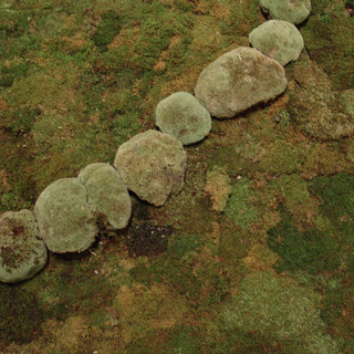 "Christian Bernard Singer Untitled Meandering IV (detail), 2009 Mosses on wood 8' x 14' x 6"""