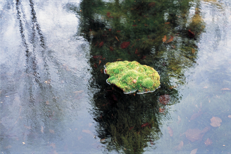 Christian Bernard Singer Bodies of Land, 2002 Floating wax body casts, moss, pond, reflection. Frechette Pond, Alfred, New York.