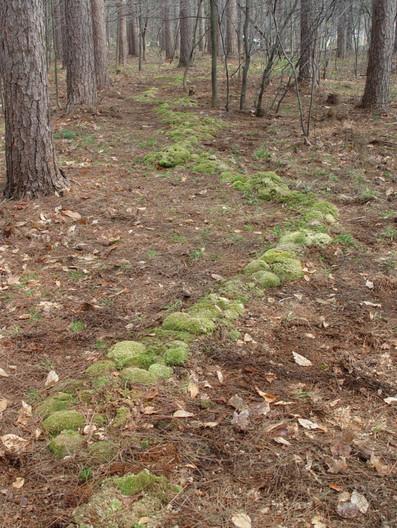 Christian Bernard Singer Untitled Meandering II, 2003 77 feet of 7 varieties of indigenous mosses Phillips Creek State Park, Upstate New York.