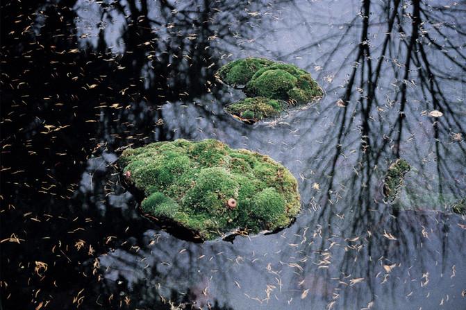 Christian Bernard Singer Bodies of Land, 2002 Floating wax body casts, moss, pond, reflection. Frechette Pond, Alfred, New York.